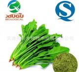 【厂家直销】【秀谷】 果蔬粉 — 菠菜粉