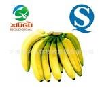 【厂家直销】【秀谷】 果蔬粉 —香蕉粉
