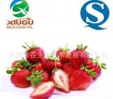 【厂家直销】【秀谷】果蔬粉 — 草莓粉