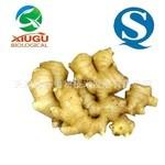 【厂家直销】【秀谷】 果蔬粉 —姜汁粉