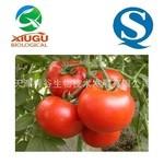 【厂家直销】【秀谷】 果蔬粉 —番茄粉