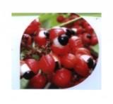 瓜拉纳香精(含瓜拉纳提取物)22%