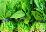 出口日本菠菜重点监控项目94项农药残留