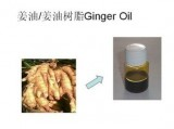 姜油树脂 自然醇正 香气自然