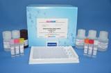 美国REAGEN粘菌素酶联免疫检测试剂盒