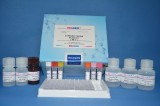 美国REAGEN甲氧苄啶残留量酶联免疫反应检测试剂盒